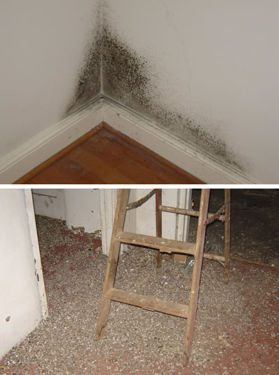 Lynchburg Mold Testing Inspection Shows Black
